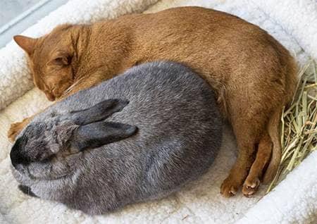 cat, bunny