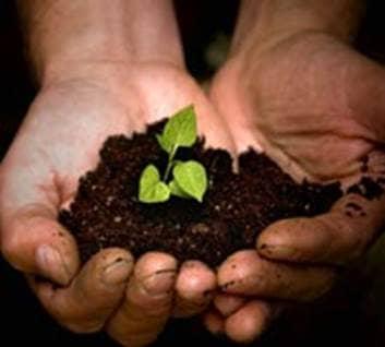 Seeds Need Planting?