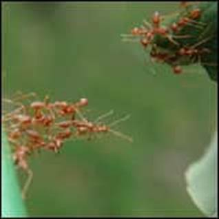 Work in Community ants together