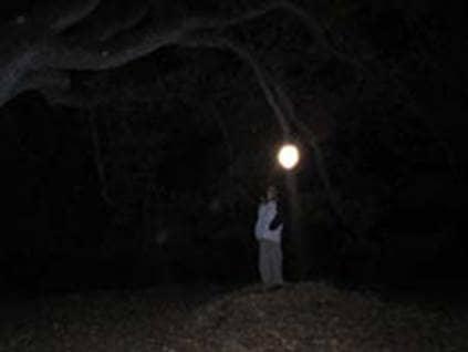 Orb Tree