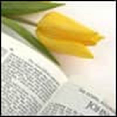How to Pray the Bible yellow tulip
