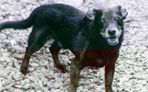 Cocoa puppy savior protector lifesaver