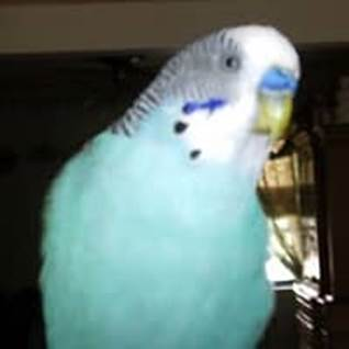 Spirit parakeet miss sad lifted