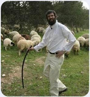 herding sheep sheppard pilgrimage Israel