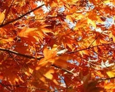 Autumn leaves orange fall