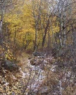 Nevada Autumn Fall Leaves Woods
