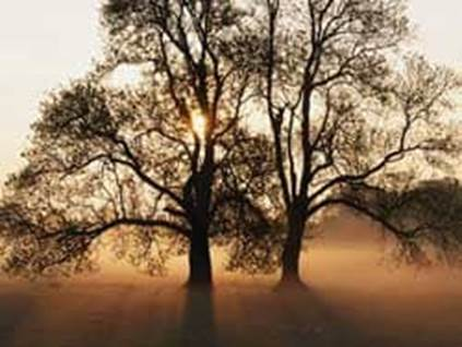 Sun Peeking Through Trees beautiful