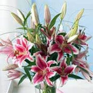 Organiz Flowers
