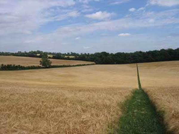 Jane Austen Hampshire Fields England