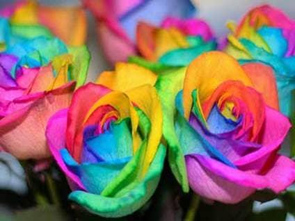inspirational rainbow roses