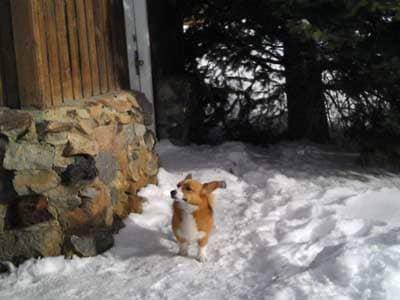 Prayables: Short Dog Stories - True Dog Stories - Ole Brings Comfort